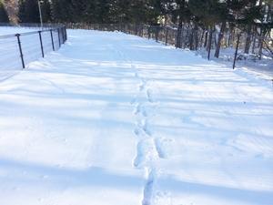 冬期間のウォーキングどうする?雪で歩けない場合…